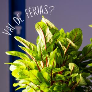 Read more about the article Por quanto tempo posso passar férias sem colocar agua na Horta Véritable? 🌱🌱